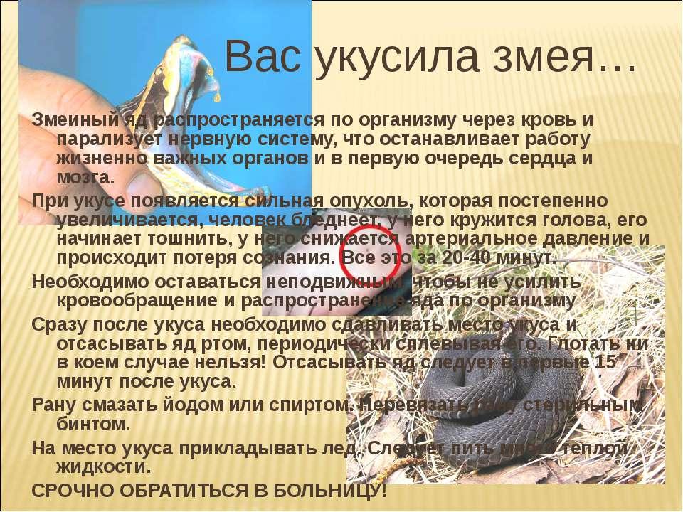 Змеиный яд распространяется по организму через кровь и парализует нервную сис...