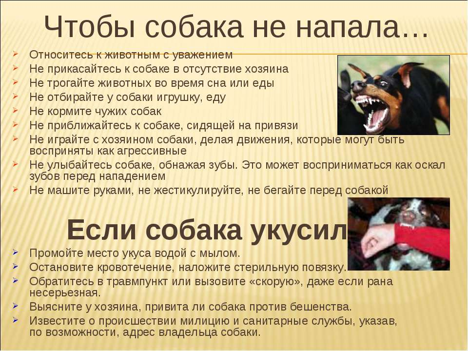 Чтобы собака не напала… Относитесь к животным с уважением Не прикасайтесь к с...