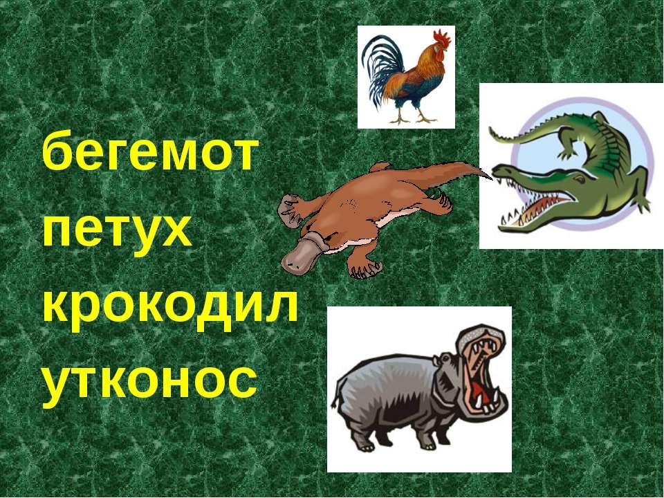 бегемот петух крокодил утконос