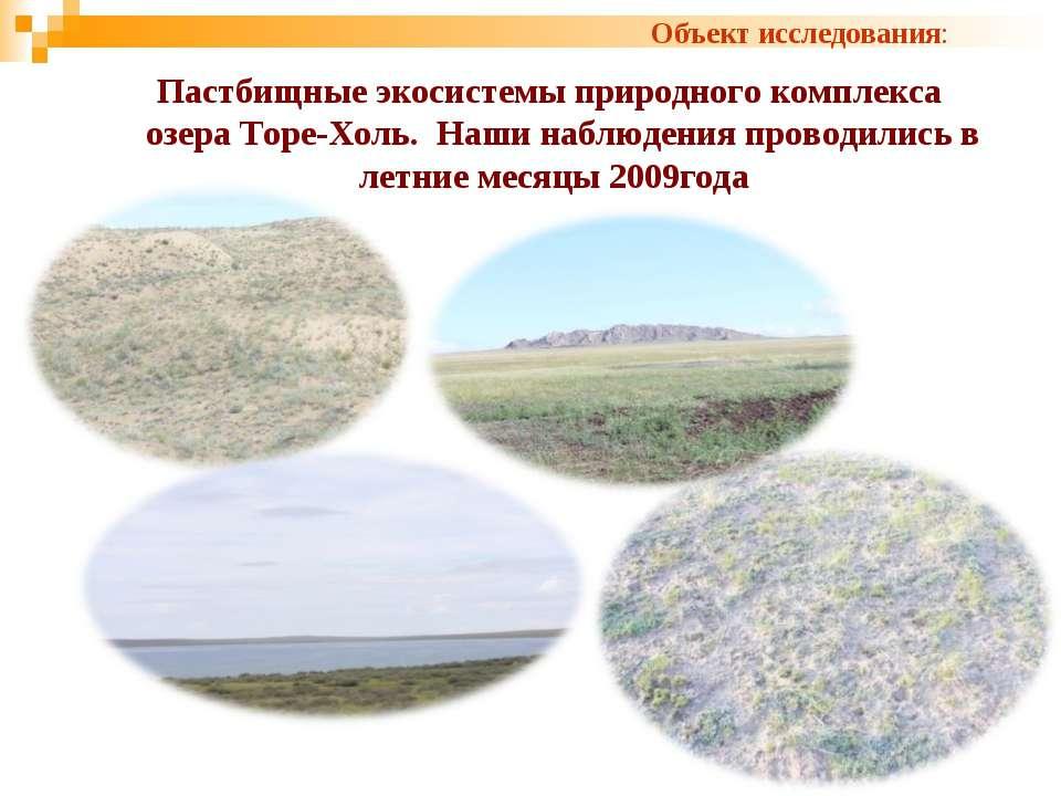 Пастбищные экосистемы природного комплекса озера Торе-Холь. Наши наблюдения п...