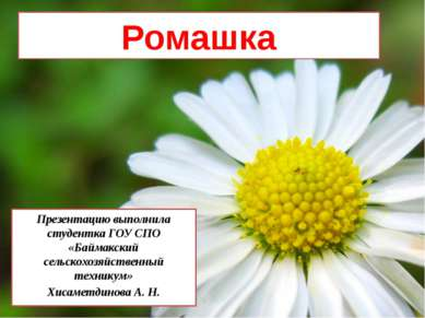 Ромашка Презентацию выполнила студентка ГОУ СПО «Баймакский сельскохозяйствен...