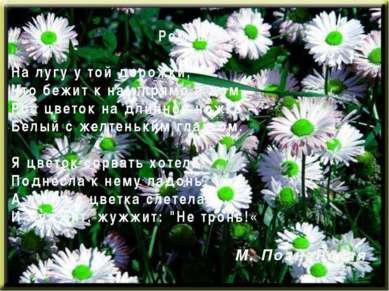 Ромашка На лугу у той дорожки, Что бежит к нам прямо в дом, Рос цветок на дли...