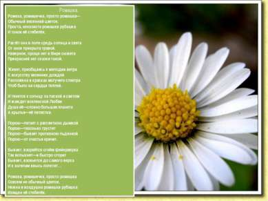 Ромашка. Ромаха, ромашечка, просто ромашка— Обычный весенний цветок. Проста, ...