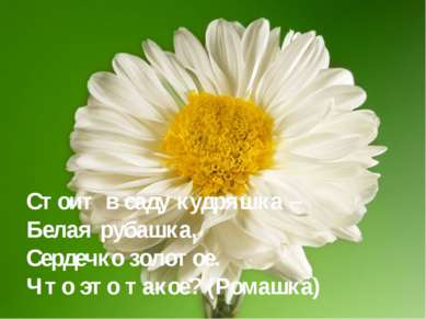 Стоит в саду кудряшка – Белая рубашка, Сердечко золотое. Что это такое? (Рома...