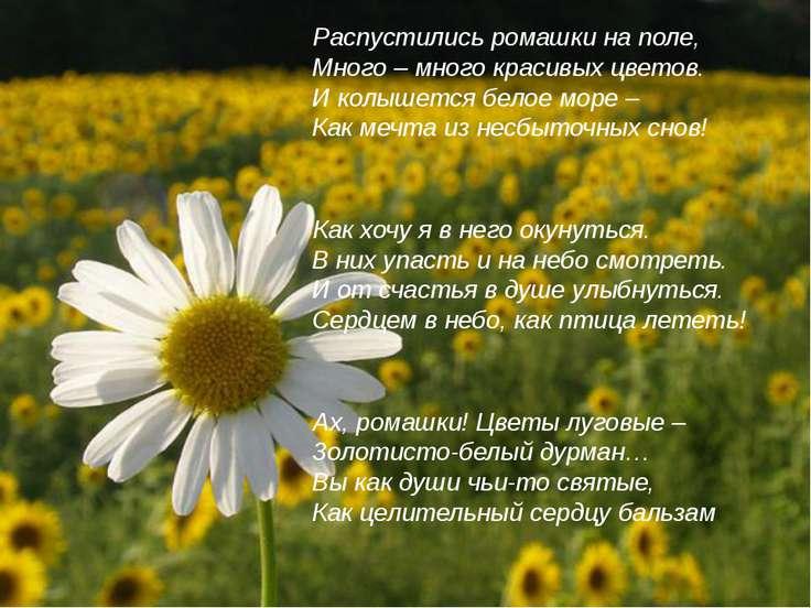 Распустились ромашки на поле, Много – много красивых цветов. И колышется бело...