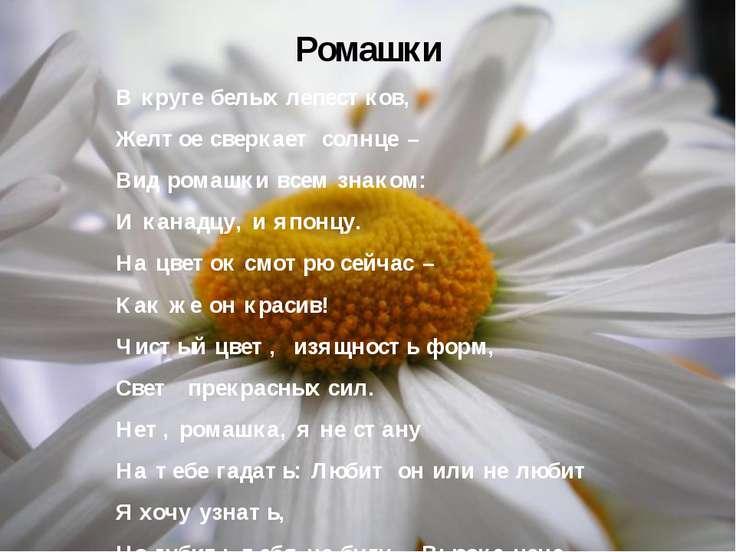 Ромашки В круге белых лепестков, Желтое сверкает солнце – Вид ромашки всем зн...