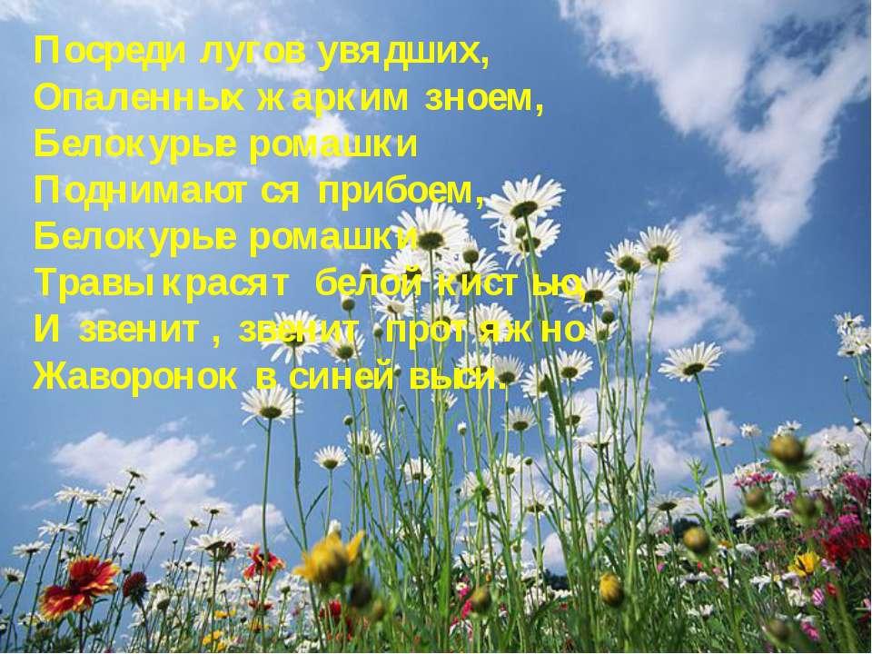 Посреди лугов увядших, Опаленных жарким зноем, Белокурые ромашки Поднимаются ...