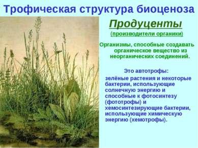 Трофическая структура биоценоза Продуценты (производители органики) Организмы...