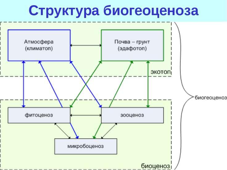 Структура биогеоценоза