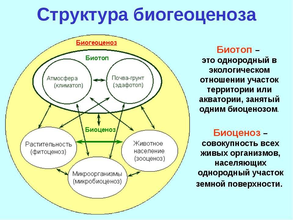 Структура биогеоценоза Биотоп – это однородный в экологическом отношении учас...