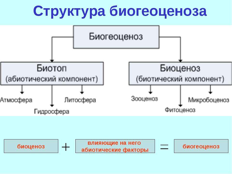 Структура биогеоценоза биоценоз влияющие на него абиотические факторы биогеоц...