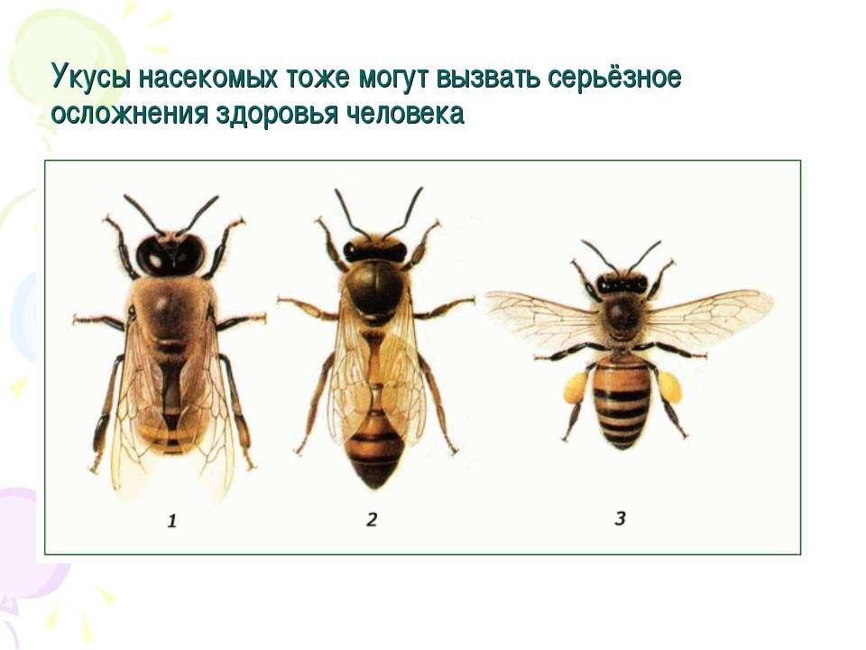 Укусы насекомых тоже могут вызвать серьёзное осложнения здоровья человека