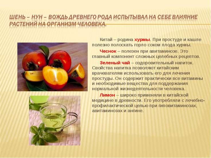 Китай – родина хурмы. При простуде и кашле полезно полоскать горло соком плод...