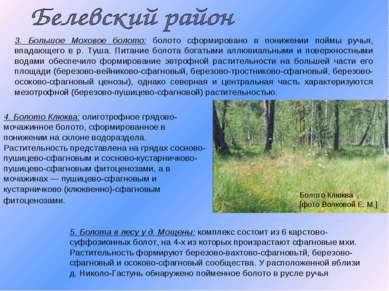 3. Большое Моховое болото: болото сформировано в понижении поймы ручья, впада...