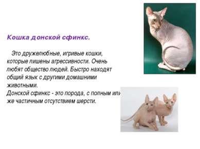 Кошка донской сфинкс. Это дружелюбные, игривые кошки, которые лишены агрессив...