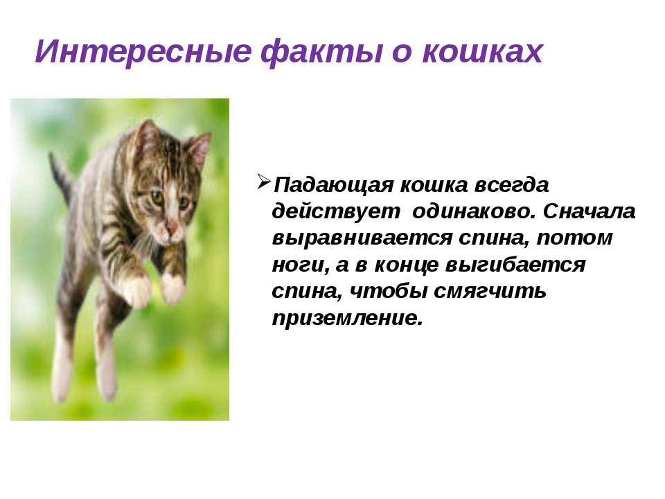 Интересные факты о кошках Падающая кошка всегда действует одинаково. Сначала ...
