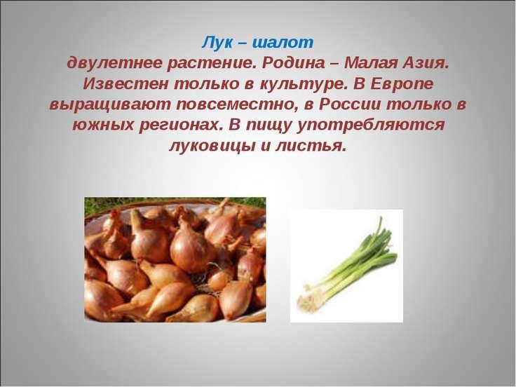 Лук – шалот двулетнее растение. Родина – Малая Азия. Известен только в культу...