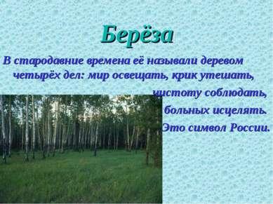 Берёза В стародавние времена её называли деревом четырёх дел: мир освещать, к...