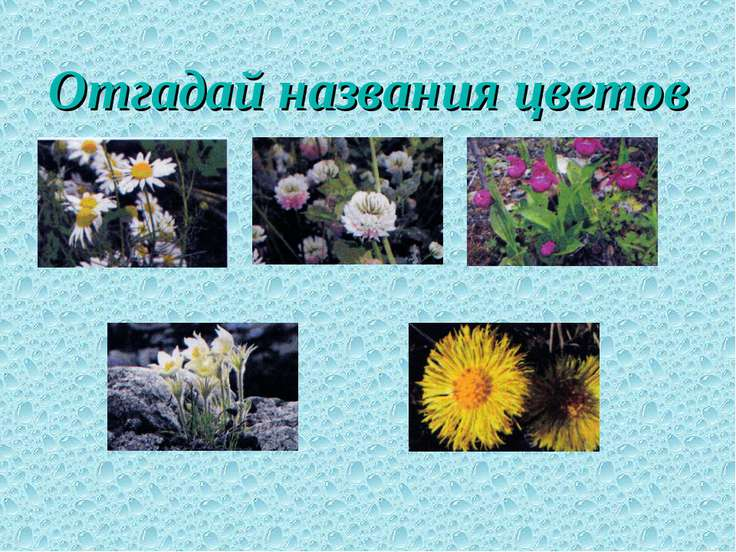 Отгадай названия цветов