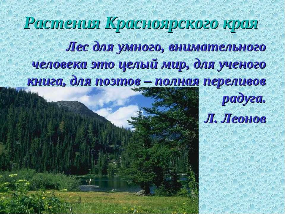 Растения Красноярского края Лес для умного, внимательного человека это целый ...