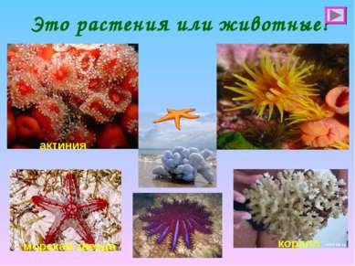 Это растения или животные? актиния морская звезда коралл