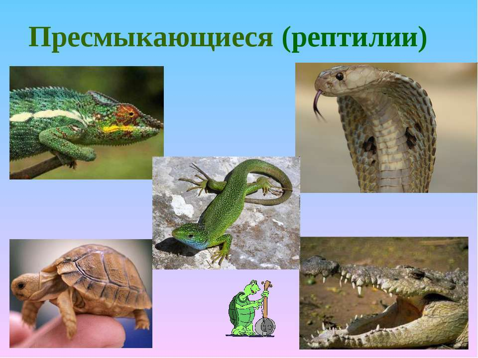 Пресмыкающиеся (рептилии)