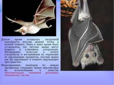 Долгое время оставалась загадочной способность летучих мышей летать в полной ...