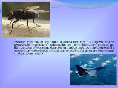 Учёные установили функцию жужжальцев мух. Во время полёта жужжальца определяю...