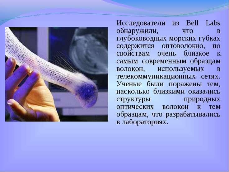 Исследователи из Bell Labs обнаружили, что в глубоководных морских губках сод...