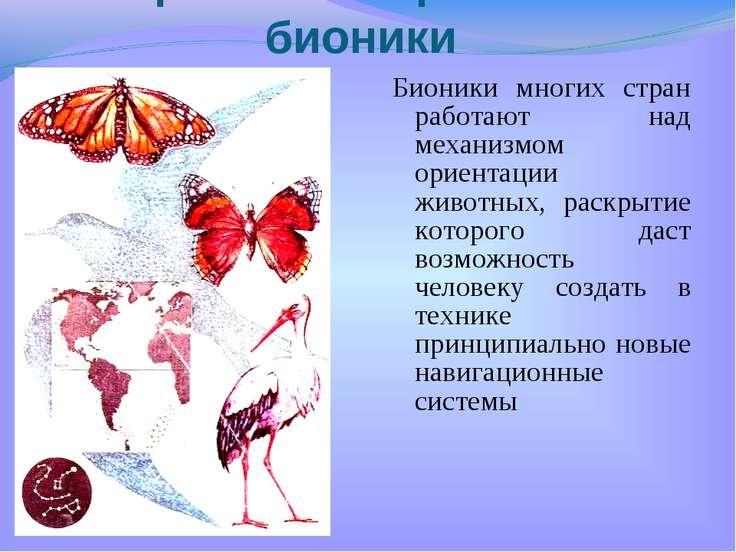 Бионики многих стран работают над механизмом ориентации животных, раскрытие к...