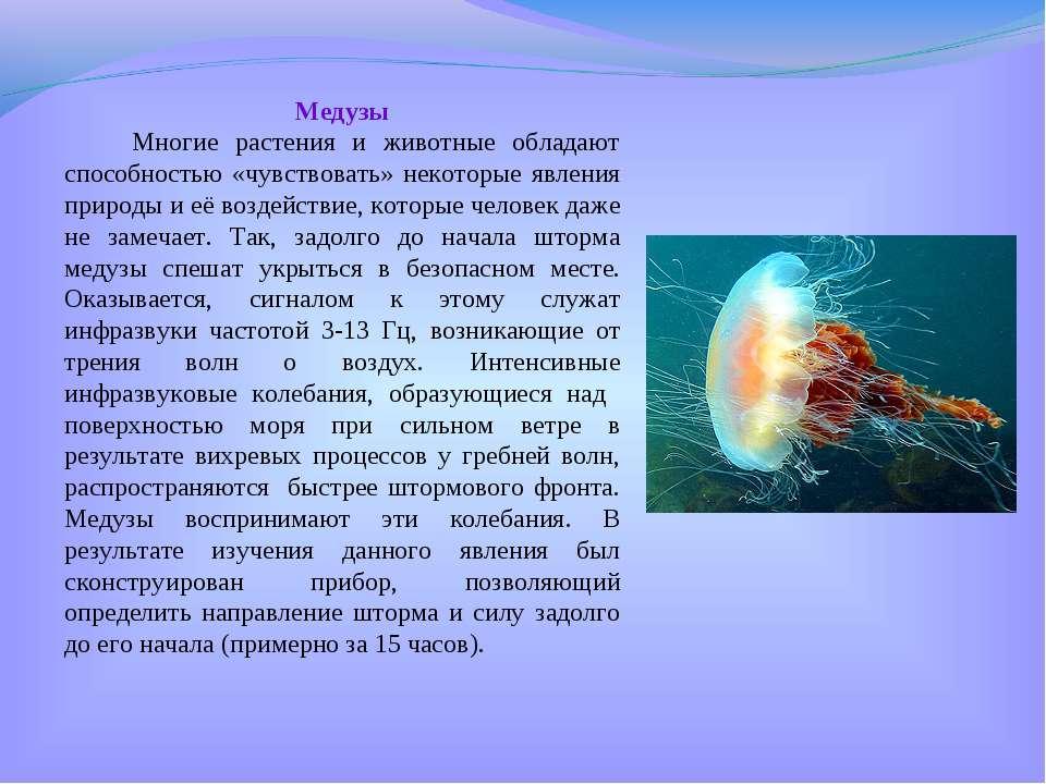 Медузы Многие растения и животные обладают способностью «чувствовать» некотор...