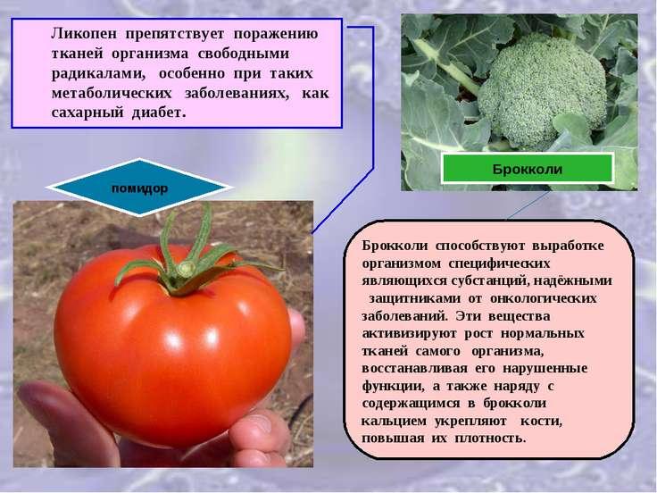 помидор Ликопен препятствует поражению тканей организма свободными радикалами...