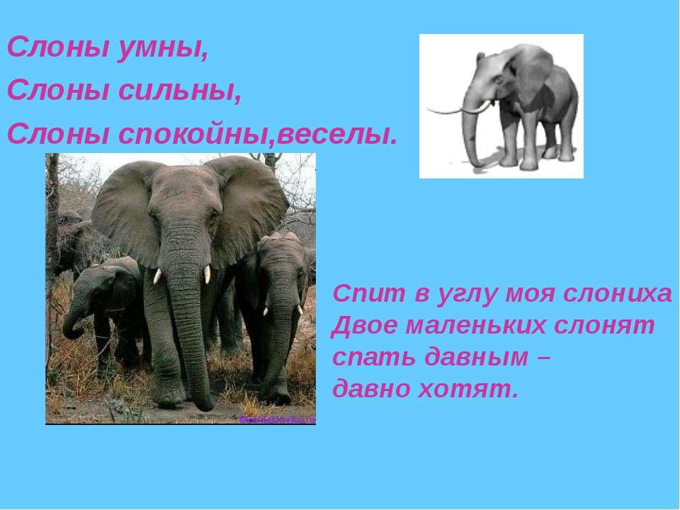 Слоны умны, Слоны сильны, Слоны спокойны,веселы. Спит в углу моя слониха Двое...