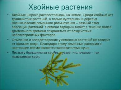 Хвойные растения Хвойные широко распространены на Земле. Среди хвойных нет тр...