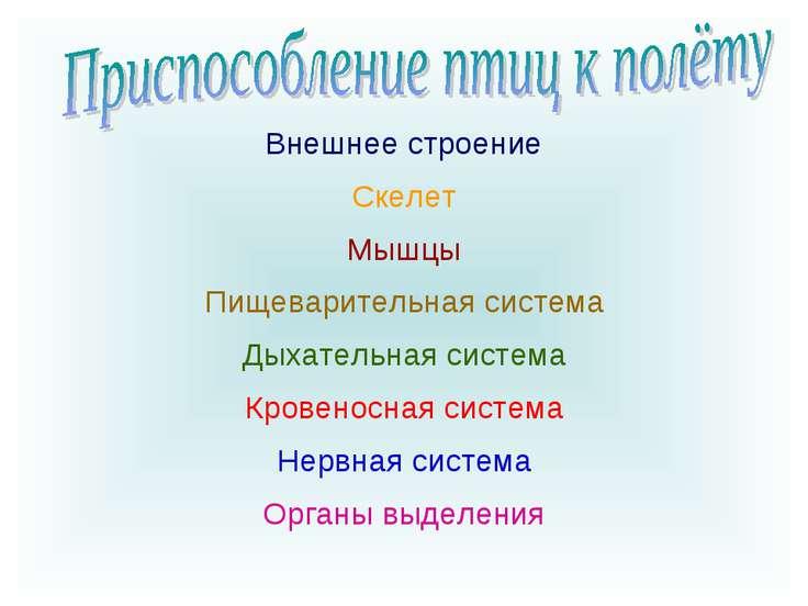 Органы выделения Нервная система Кровеносная система Дыхательная система Пище...