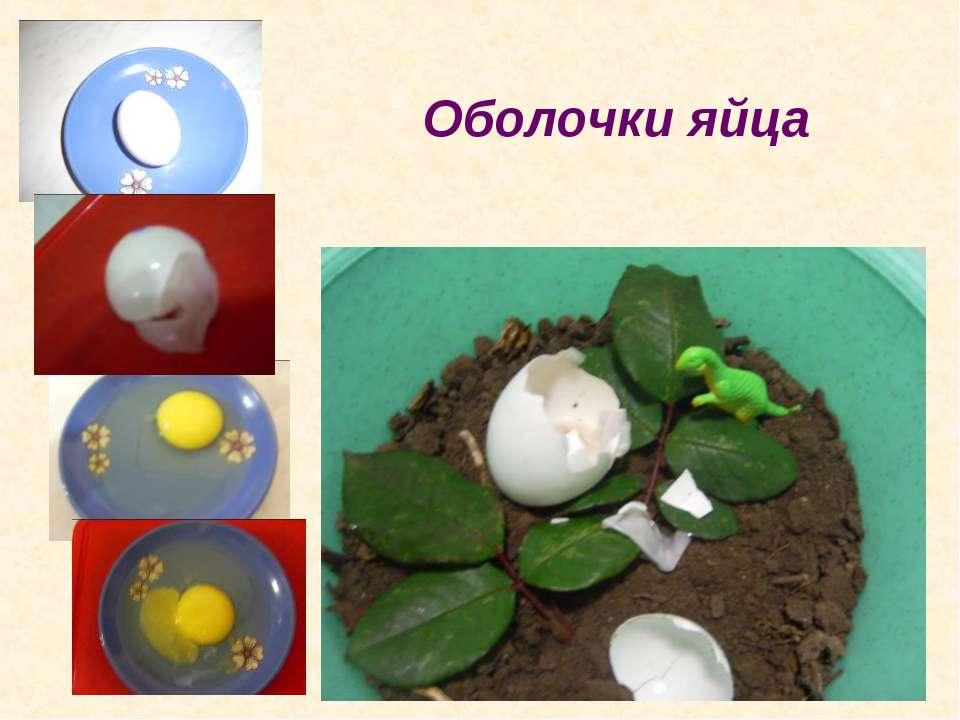 Оболочки яйца