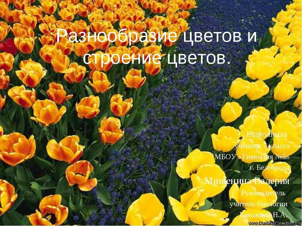Разнообразие цветов и строение цветов. Выполнила ученица 7 класса МБОУ «Гимна...