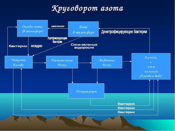 Нитраты в почве Растительные белки Животные белки Аммиак и ионы аммония (в по...