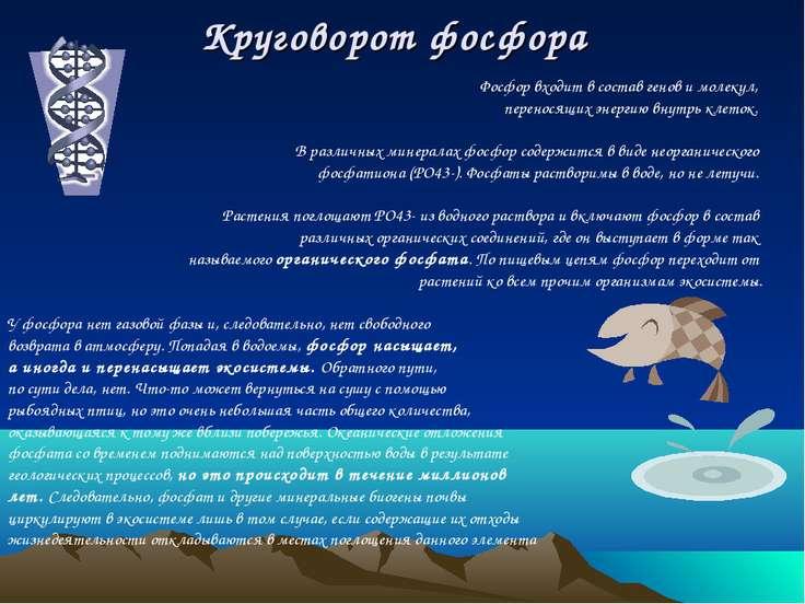 Круговорот фосфора Фосфор входит в состав генов и молекул, переносящих энерги...