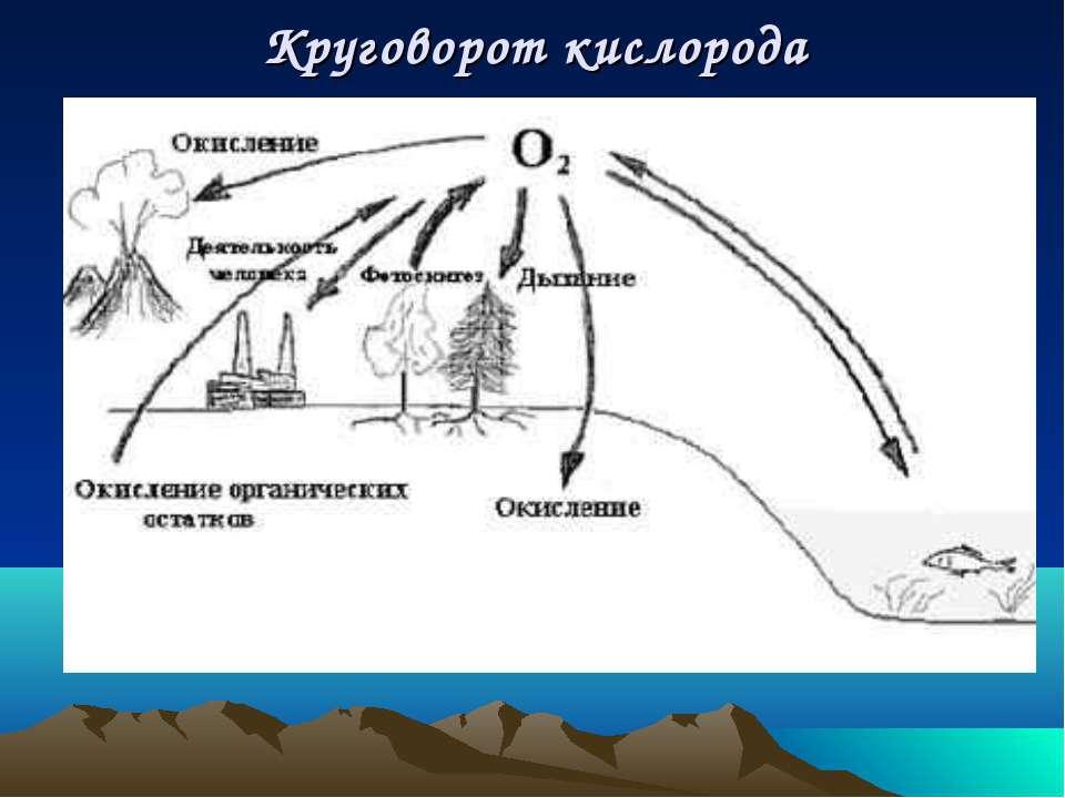 Круговорот кислорода