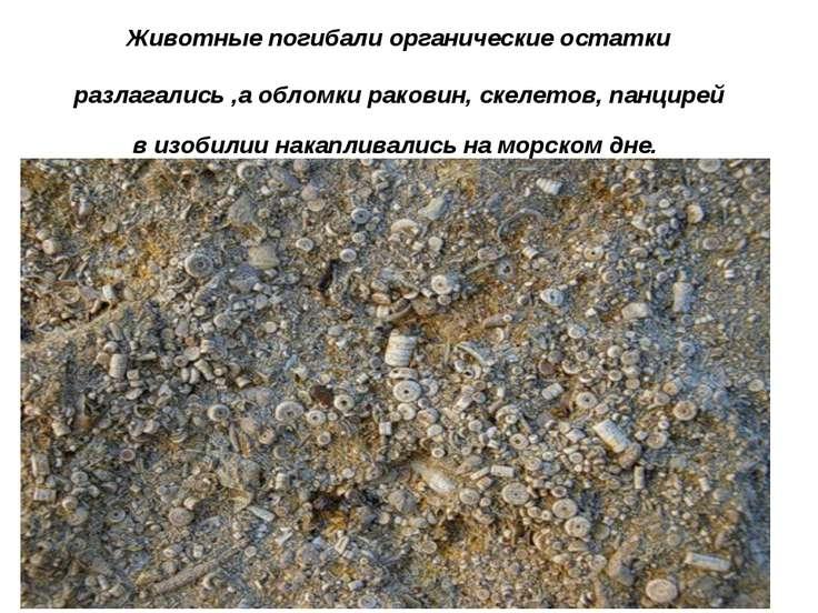 Животные погибали органические остатки разлагались ,а обломки раковин, скелет...