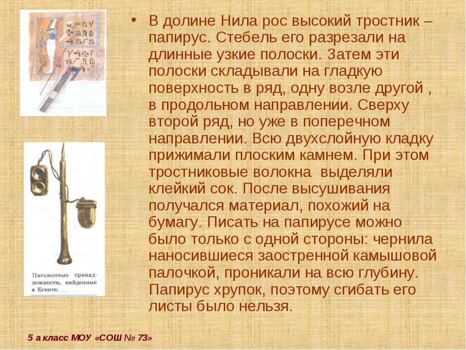 5 а класс МОУ «СОШ № 73» В долине Нила рос высокий тростник – папирус. Стебел...