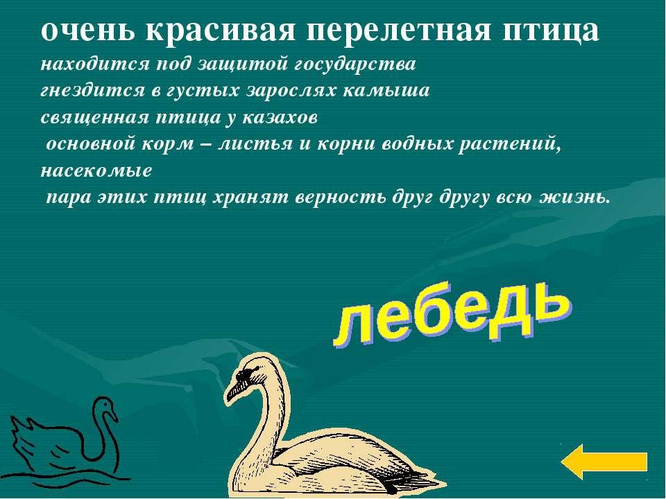 очень красивая перелетная птица находится под защитой государства гнездится в...
