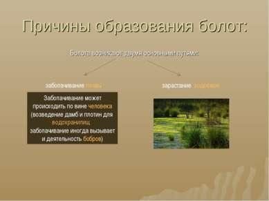 Причины образования болот: Болота возникают двумя основными путями: заболачив...