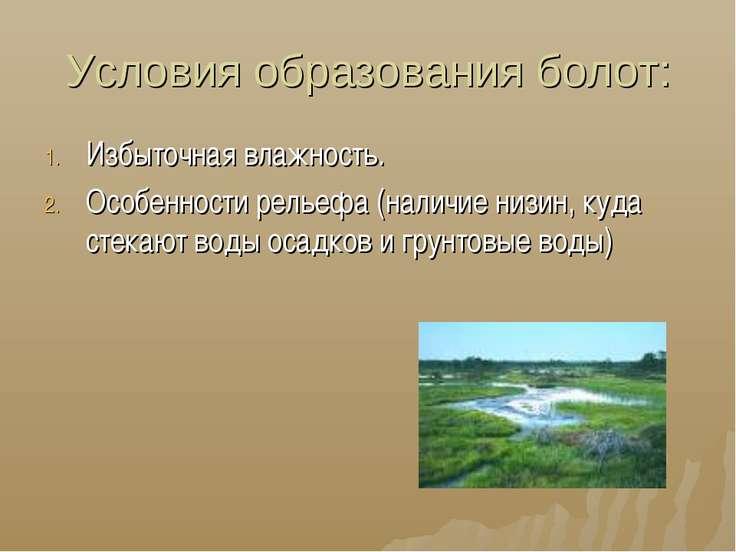 Условия образования болот: Избыточная влажность. Особенности рельефа (наличие...