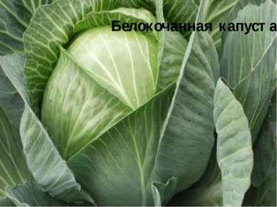 Белокочанная капуста Белокочанная капуста стоит на главном месте в кулинарии....