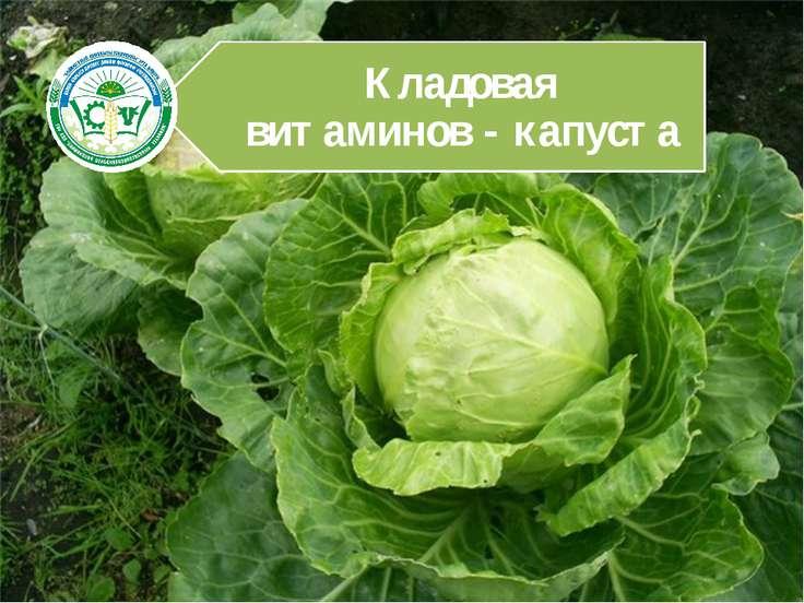 Пожалуй ни один другой овощ не приковывал к себе такого пристального внимания...