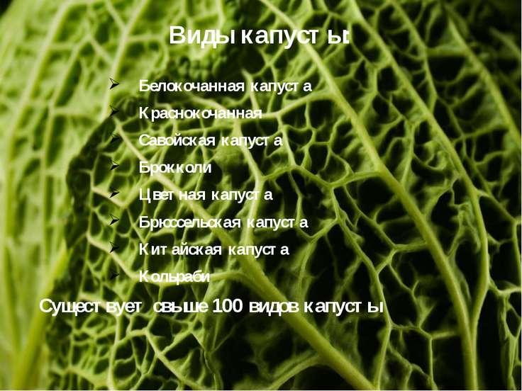 Виды капусты: Белокочанная капуста Краснокочанная Савойская капуста Брокколи ...
