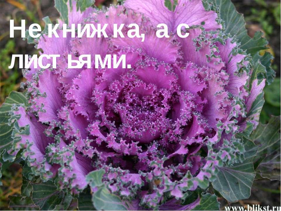 Не книжка, а с листьями. Известно, что славяне начали возделывать капусту не ...