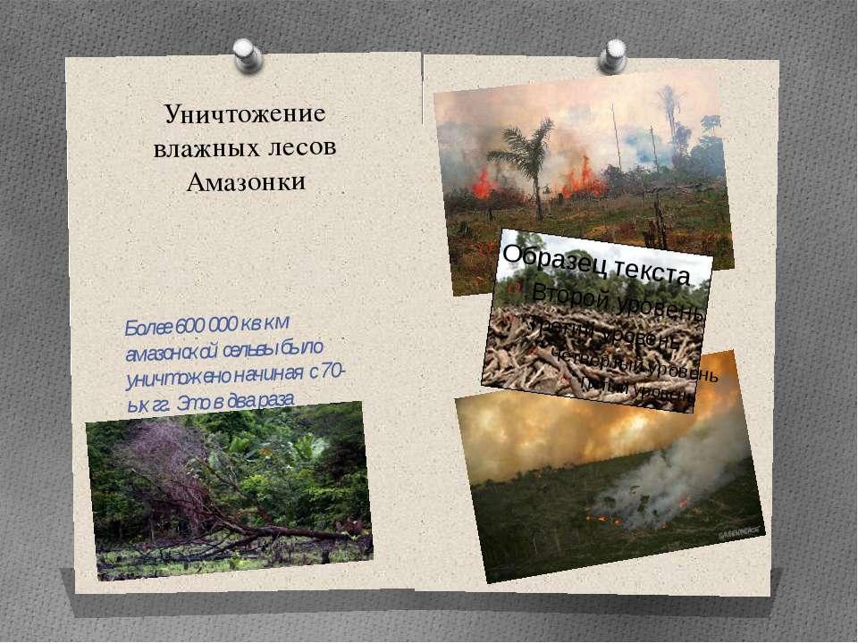 Уничтожение влажных лесов Амазонки Более 600 000 кв км амазонской сельвы было...